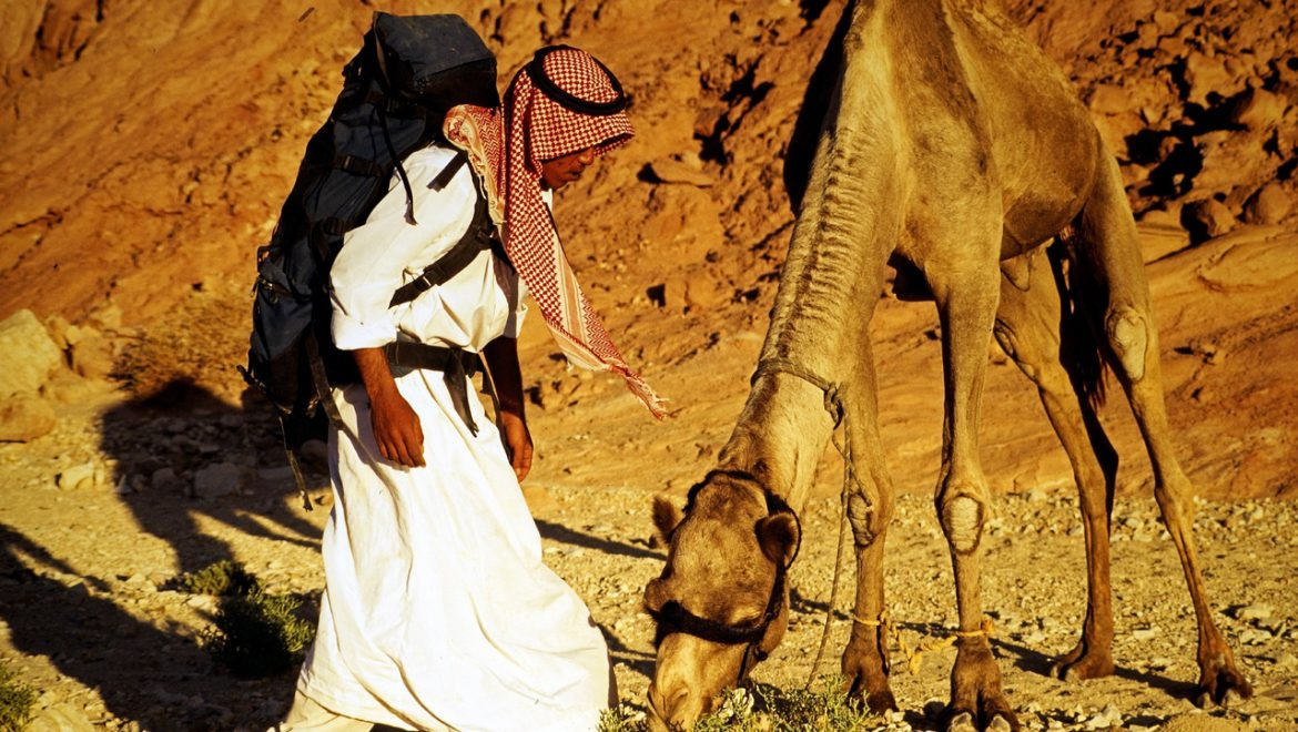 The Bedouins of the Negev: A Population Transforming
