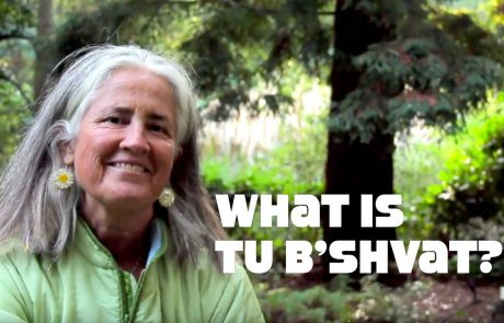 Tu B'Shvat: Celebrating the Spiritual & the Environmental